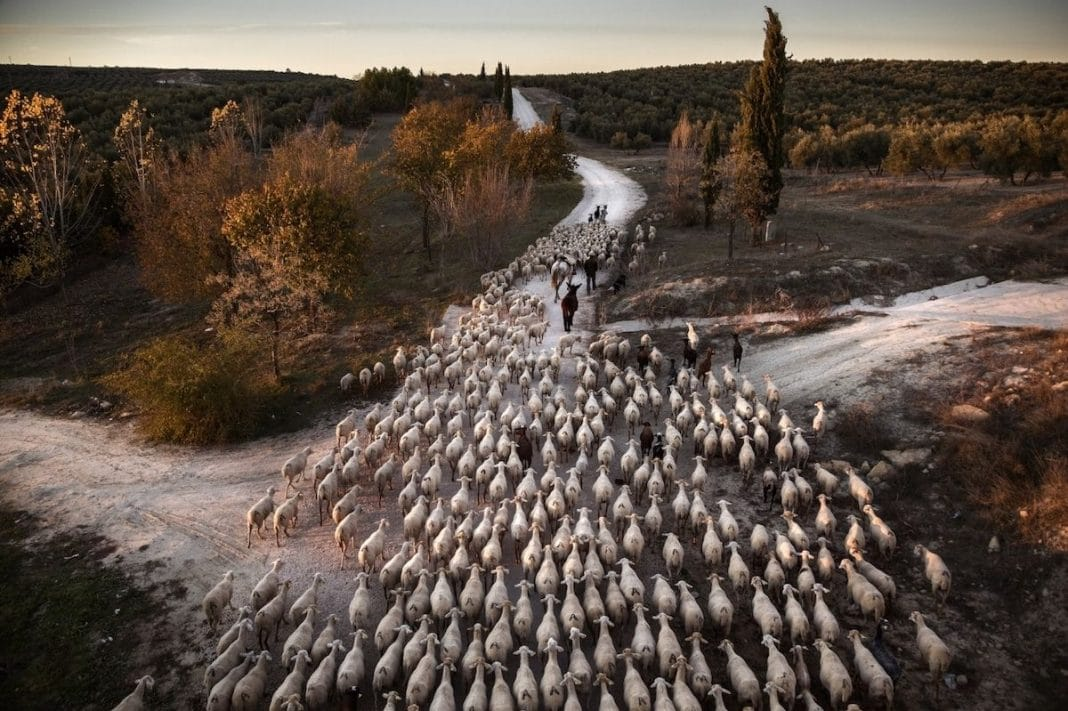 """""""Transhumance in Spain"""" by Susana Giron. Spain. 1° Classified, Journeys & Adventures"""