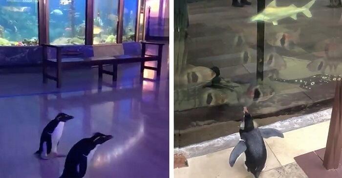 Penguins in the aquarium - Animals in Quarantine