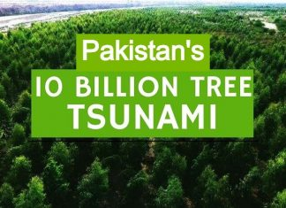 "Pakistan's ""10 Billion Tree Tsunami"" Has Transformed the Area in One Year"