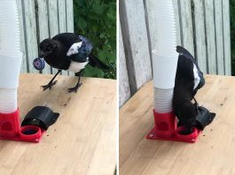 A Man Built a Bird Feeder That Accepts Bottle Caps For Food