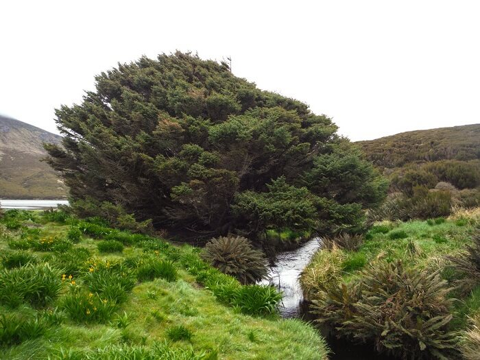 Loneliest Tree - World Records Held by Plants