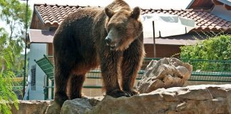 Teenage Girl Fights Off Bear to Save Dogs